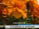 新闻天天报2019-02-01
