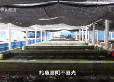 【老闽南】南江渔韵