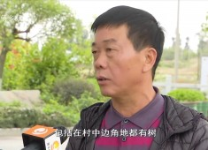 """【聚焦晋江】晋江:绿意""""安家"""" 移步皆是景"""