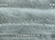 """【聚焦晋江】螺旋碳纤维:新材料又一""""枭雄"""""""
