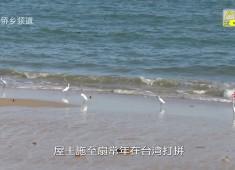 【老闽南】晋台情系古大厝
