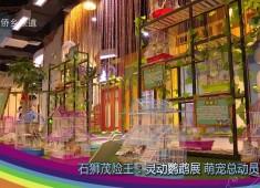 彩虹桥2018-05-02