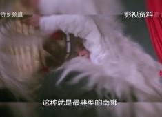 【老闽南】闽南雄风看舞狮