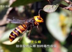 【老闽南】蜂情万种