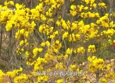 【老闽南】春和景明踏青去