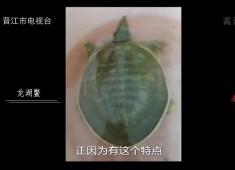 【老闽南】人文水韵探龙湖