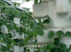 """【老闽南】品""""味"""":立夏"""