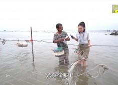 【老闽南】赶海妙境 醉鲜湖尾